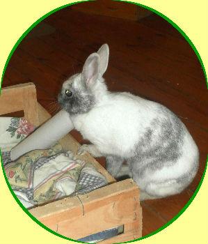 Jeux pour le du lapin - Jeux de papier toilette ...